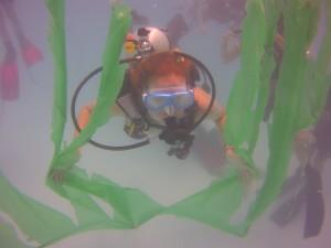 "Scuba Camper diving through the ""kelp forest"""
